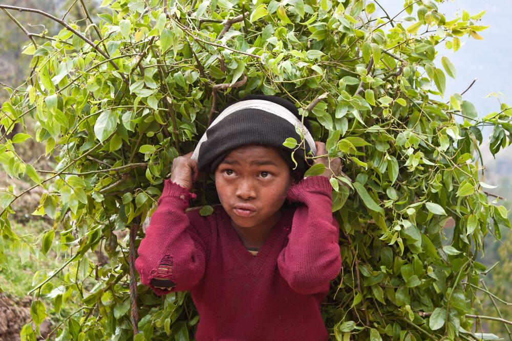 Branch boy - fotokunst von Tom Sabbadini