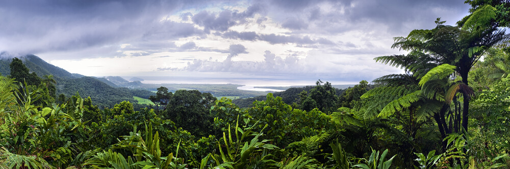 Daintree forest cape tribulation - Fineart photography by Franzel Drepper