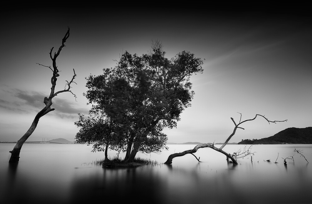 Generation - Fineart photography by How Pin Tang