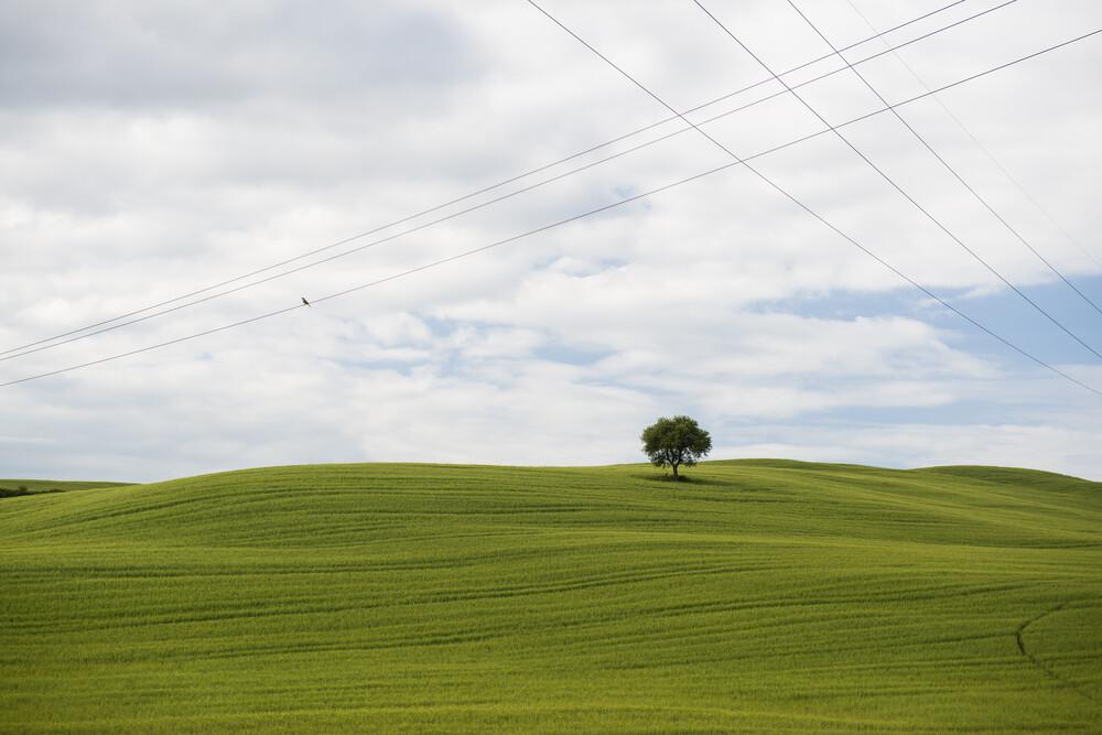 Toskana #2 - fotokunst von Daniel Schoenen