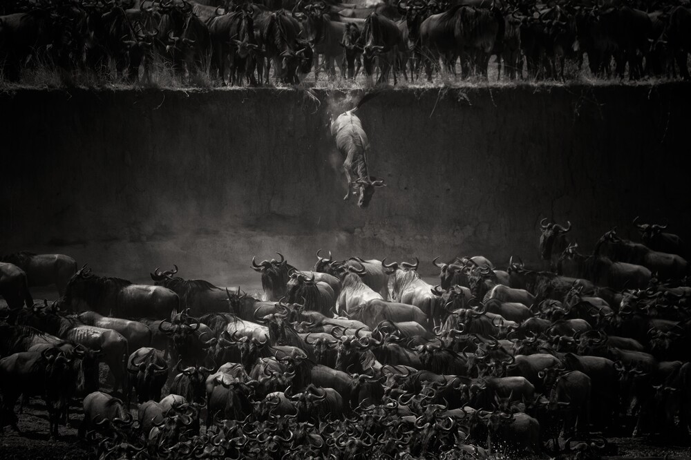The Great Migration - Fineart photography by Nicole Cambré