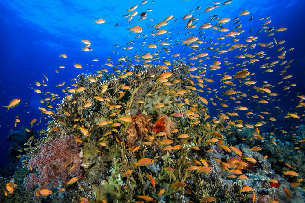 Red Sea reef - fotokunst von Christian Schlamann