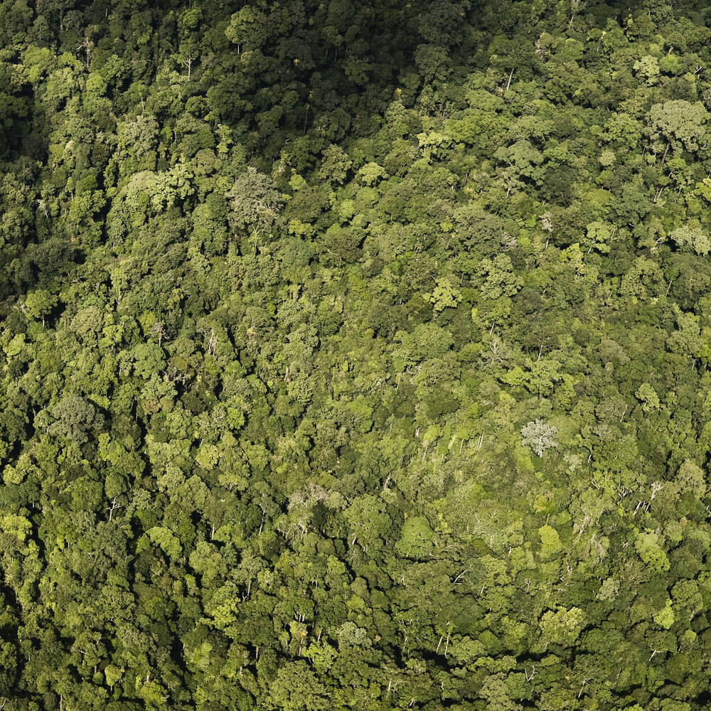 Rainforest - Fineart photography by Jonas Bach