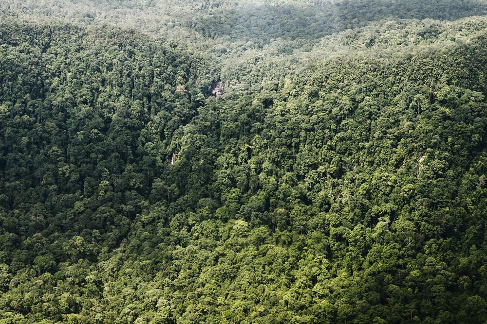 Rainforest II - fotokunst von Jonas Bach