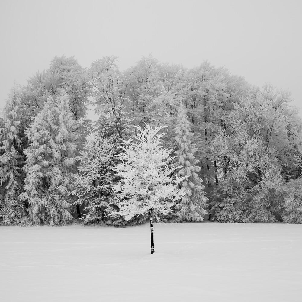 sure thing - fotokunst von Hannes Ka