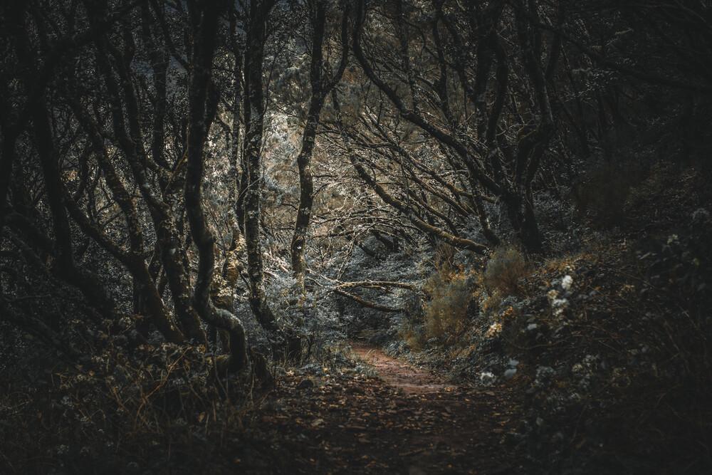 Madeira - Geisterwald - fotokunst von Jean Claude Castor