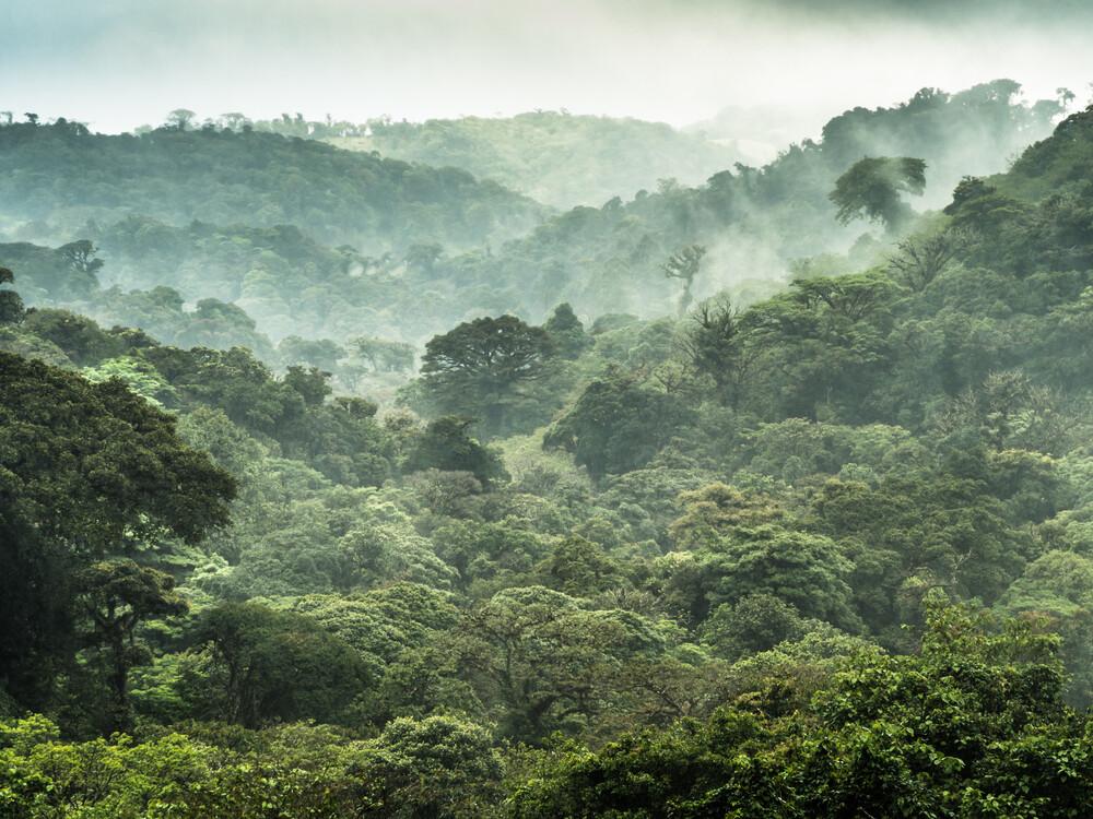 Der Nebelwald von Monteverde 2 - Fineart photography by Johann Oswald