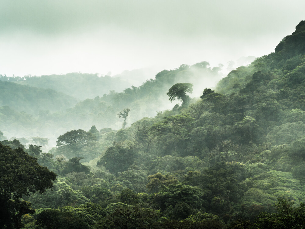 Der Nebelwald von Monteverde 3 - Fineart photography by Johann Oswald