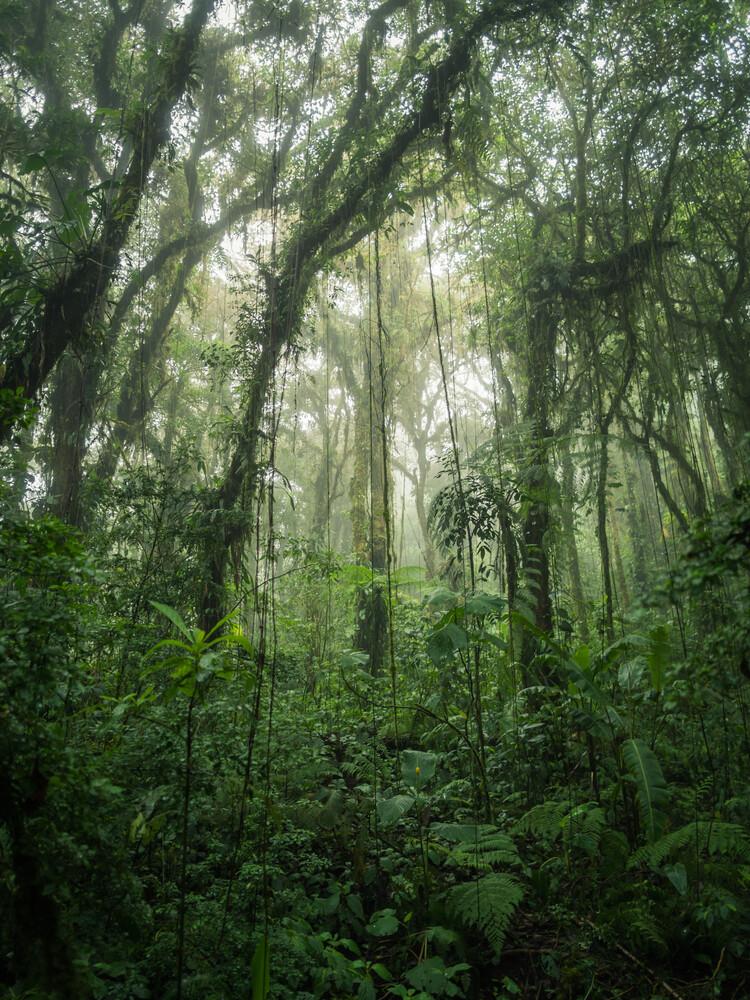 Santa Elena Cloud Forest 1 - Fineart photography by Johann Oswald