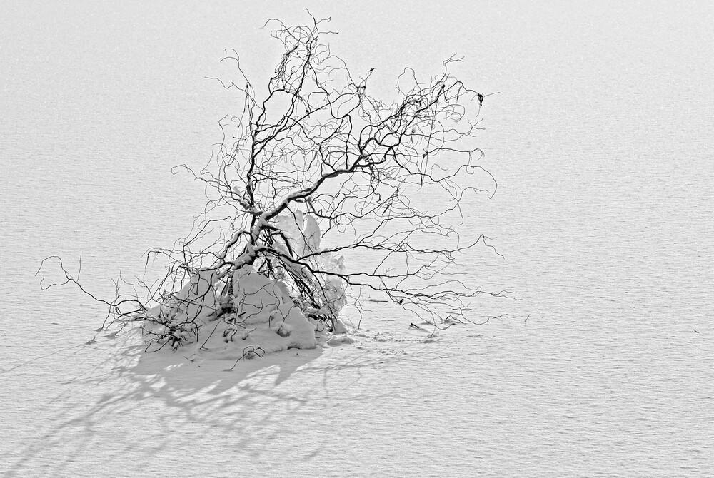Kälte - Fineart photography by Volker Benksch
