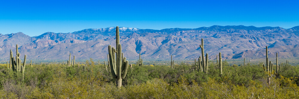 Cacti Panorama - Fineart photography by Marc Rasmus