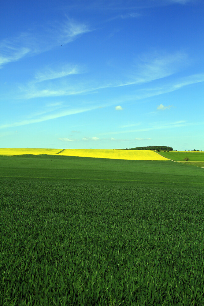 yellow - Fineart photography by Jens Berger