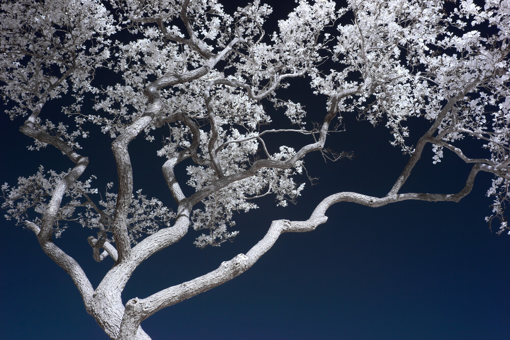Bonsai - fotokunst von Holger Nimtz