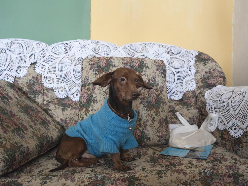 El perro de Jorge - fotokunst von Ana Cayuela