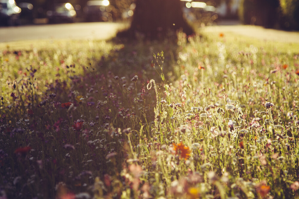 Blumenwiese im Sonnenuntergang - fotokunst von Nadja Jacke