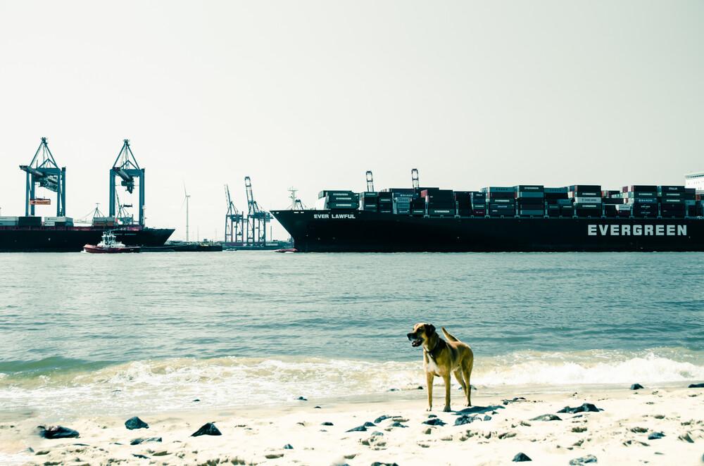 Dog in Hamburg - Fineart photography by Gabriele Brummer