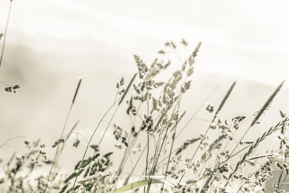 morning dew - fotokunst von Philipp Langebner