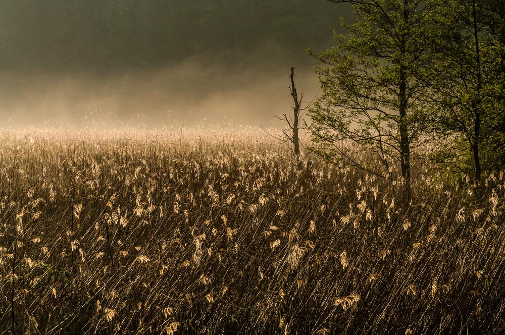 Schilf im Nebel - fotokunst von Ralf Germer