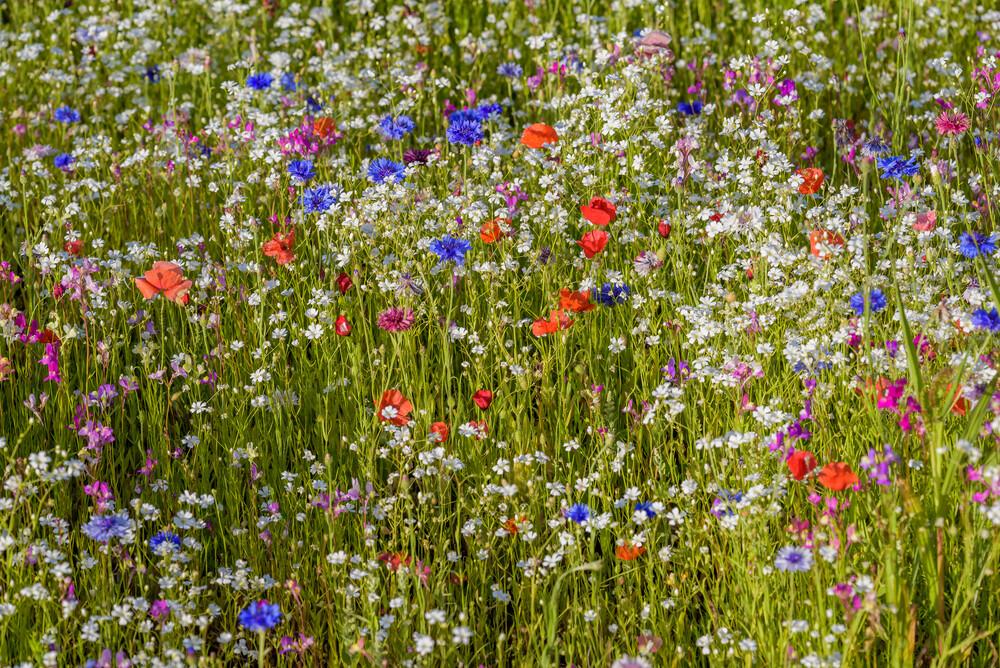 Blütenzauber - Fineart photography by Ralf Germer