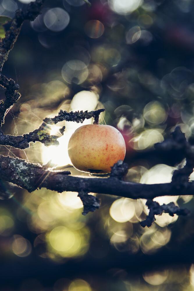 Apfel am Apfelbaum im Sonnenlicht - Gegenlicht - fotokunst von Nadja Jacke