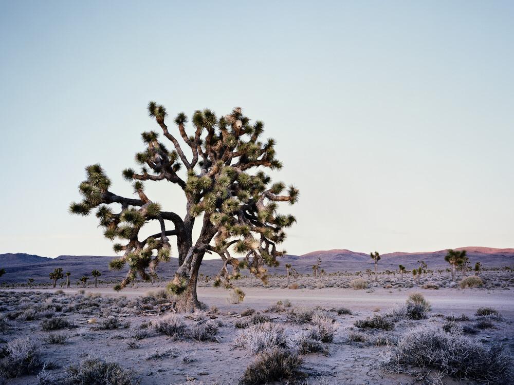 Joshua Tree - Death Valley.* USA - fotokunst von Ronny Ritschel