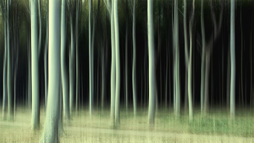 Gespensterwald - fotokunst von Oliver Buchmann