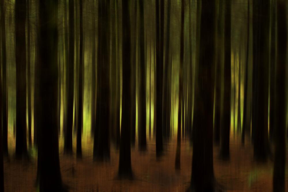 Im Wald - fotokunst von Oliver Buchmann