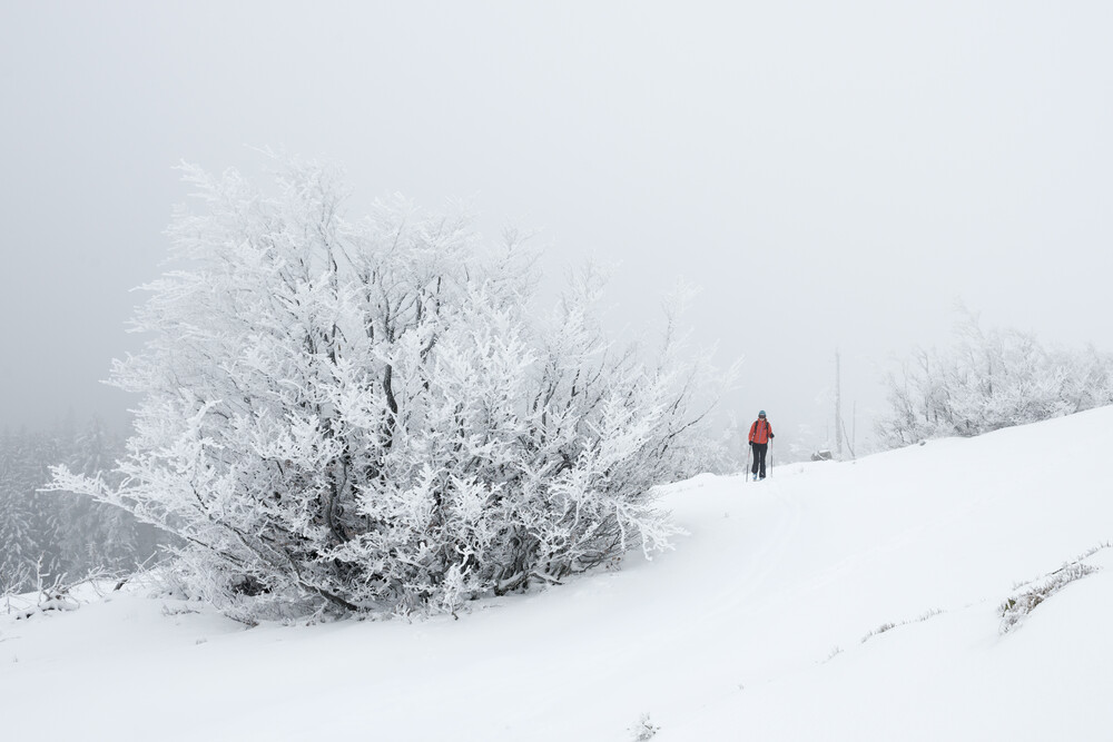 Black Forest Winter - Fineart photography by Stefan Huber