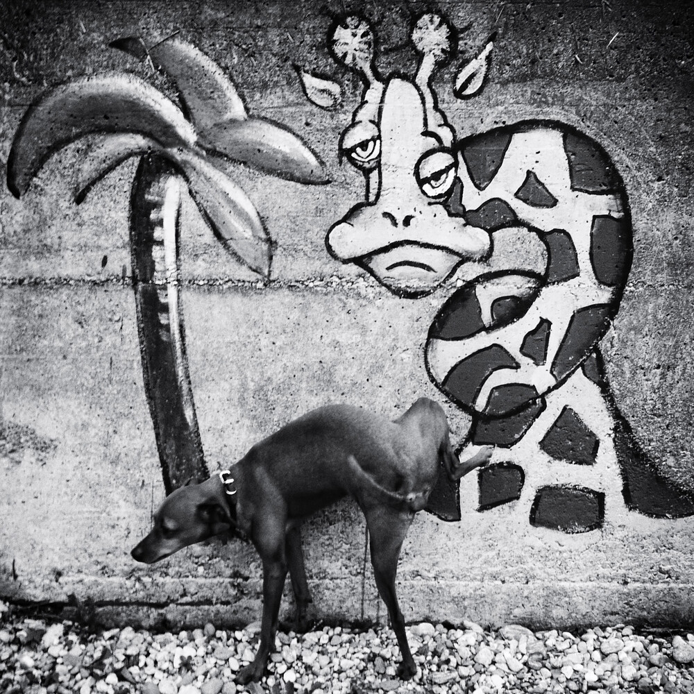 Hund ... - Fineart photography by Christine Frick