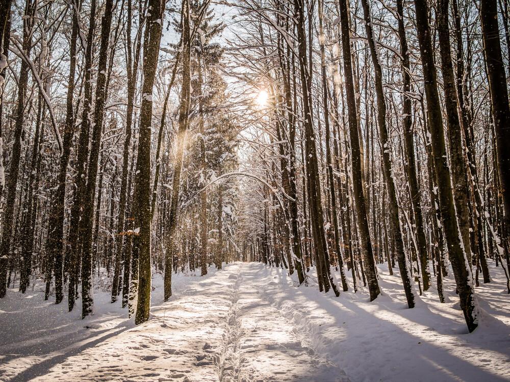 Walking in the Winter Wonder Land - Fineart photography by Johann Oswald