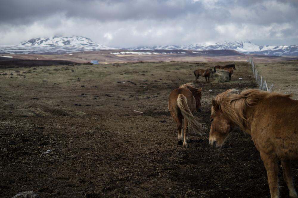 Der lange Weg nach Westen - Fineart photography by Nico Schütt