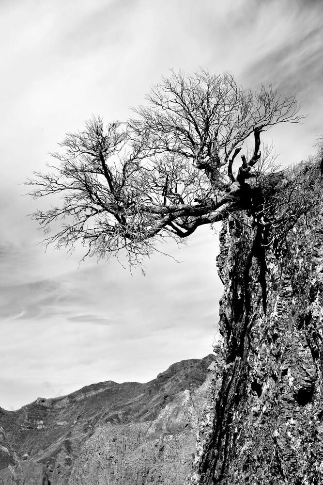 Kiefer im Gebirge - fotokunst von Georg Tausche