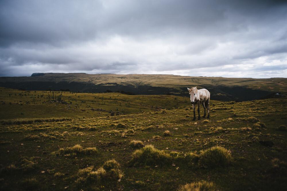 Horse in the Simian - fotokunst von Tahir Karmali