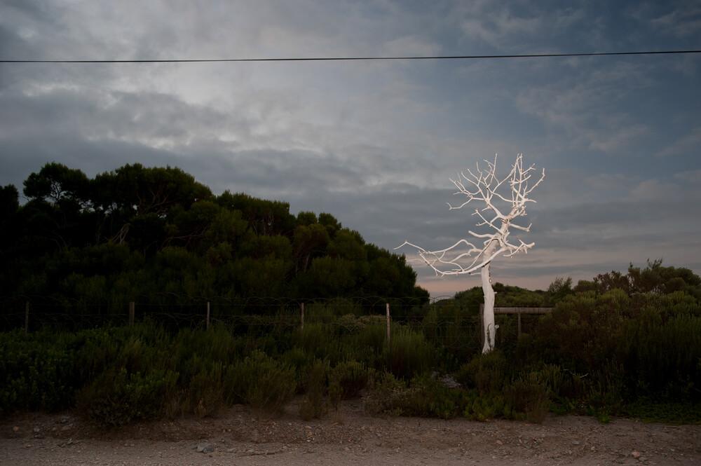 Roadside - Fineart photography by Jac Kritzinger