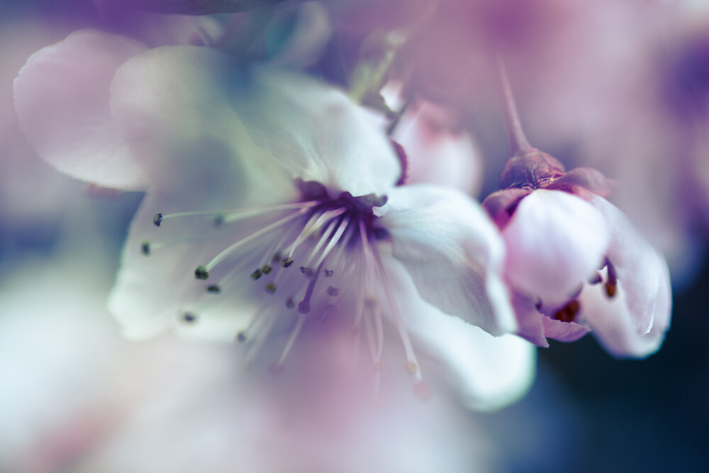 Flower detail - Fineart photography by Gabriele Brummer
