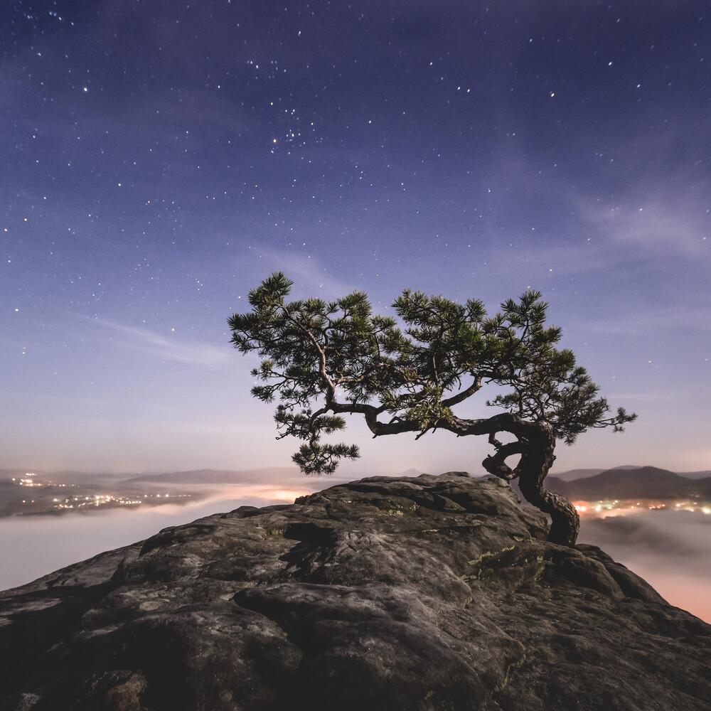 Old Pine - Study 2 - fotokunst von Ronny Behnert