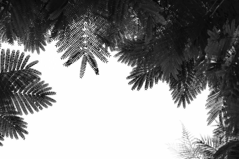The Tree Top - fotokunst von Tal Paz Fridman