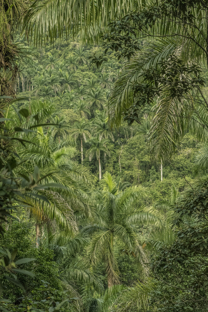 Rainforest Cuba - fotokunst von Saskia Gaulke