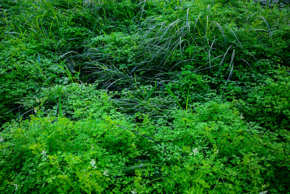 Neglected/Natural Garden in the City - Fineart photography by Tal Paz-fridman