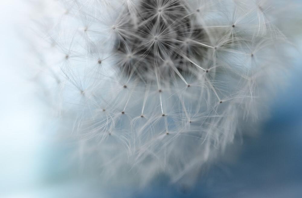 Pusteblume - fotokunst von Gabriele Brummer