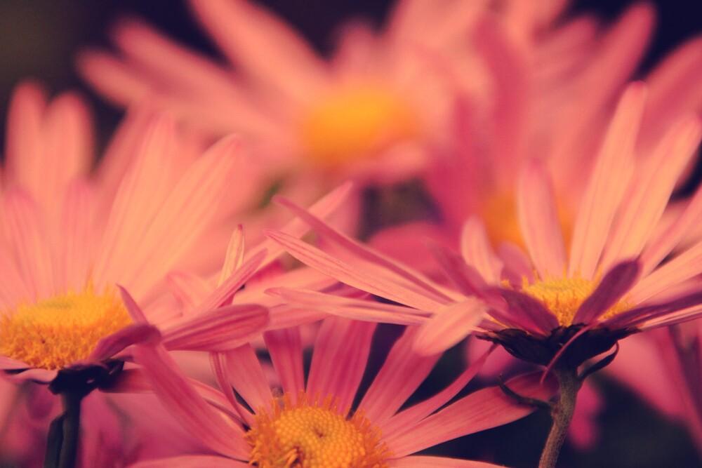 Blüten - fotokunst von Rolf Bökemeier