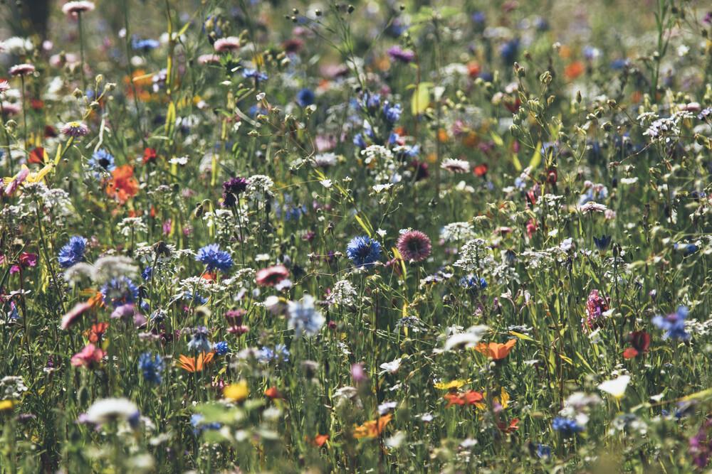 Wiese voll farbenfroher Sommerblumen - fotokunst von Nadja Jacke