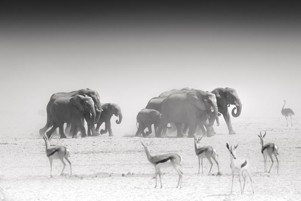 The Group - fotokunst von Tillmann Konrad