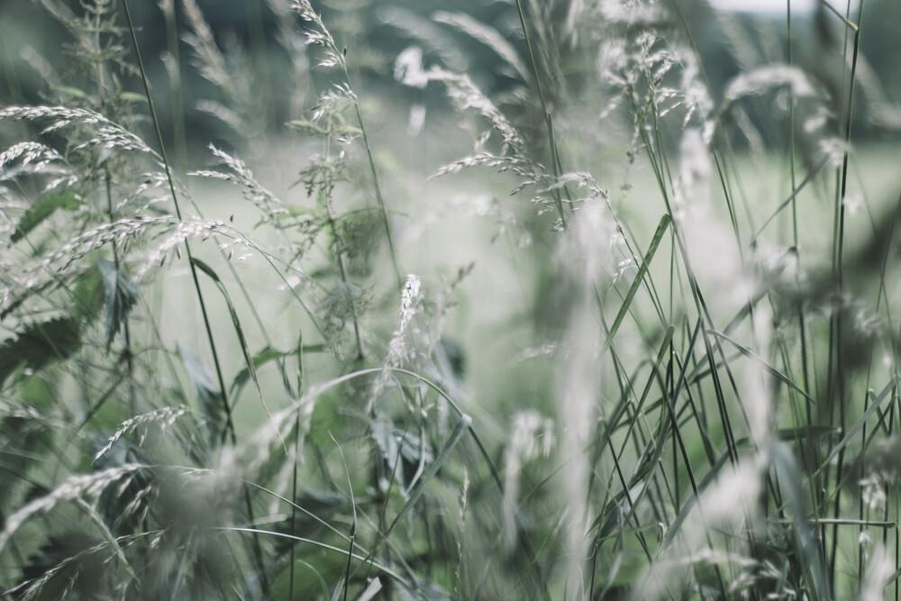 Gräser in sommerlicher Brise - fotokunst von Nadja Jacke