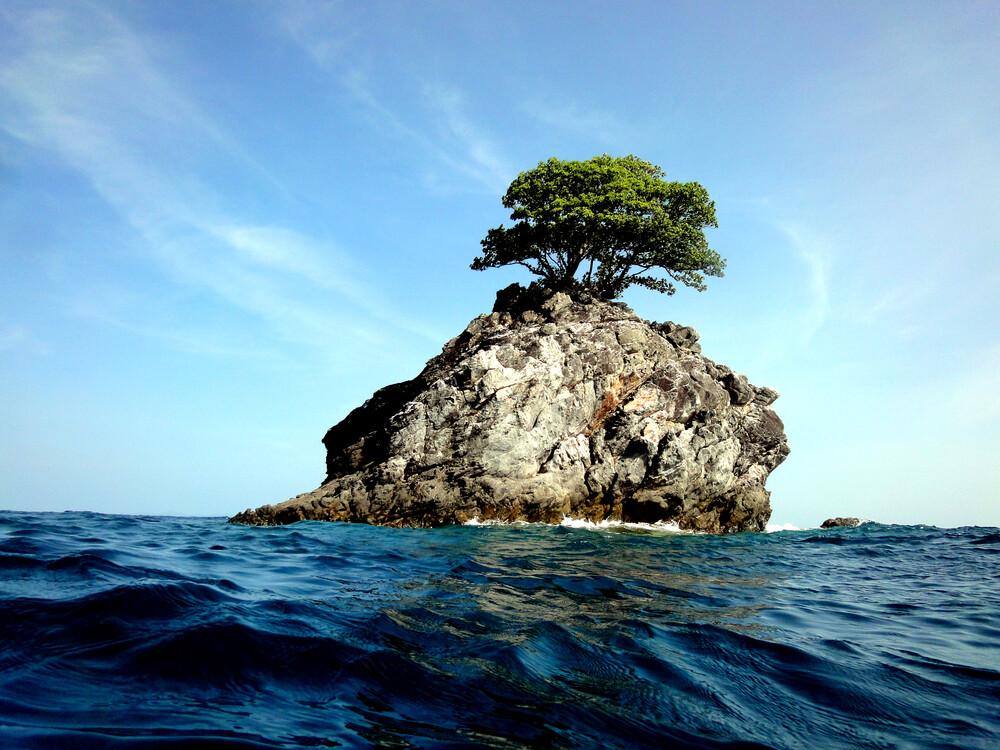 Lonely Tree  - fotokunst von Neeltje Obergfell