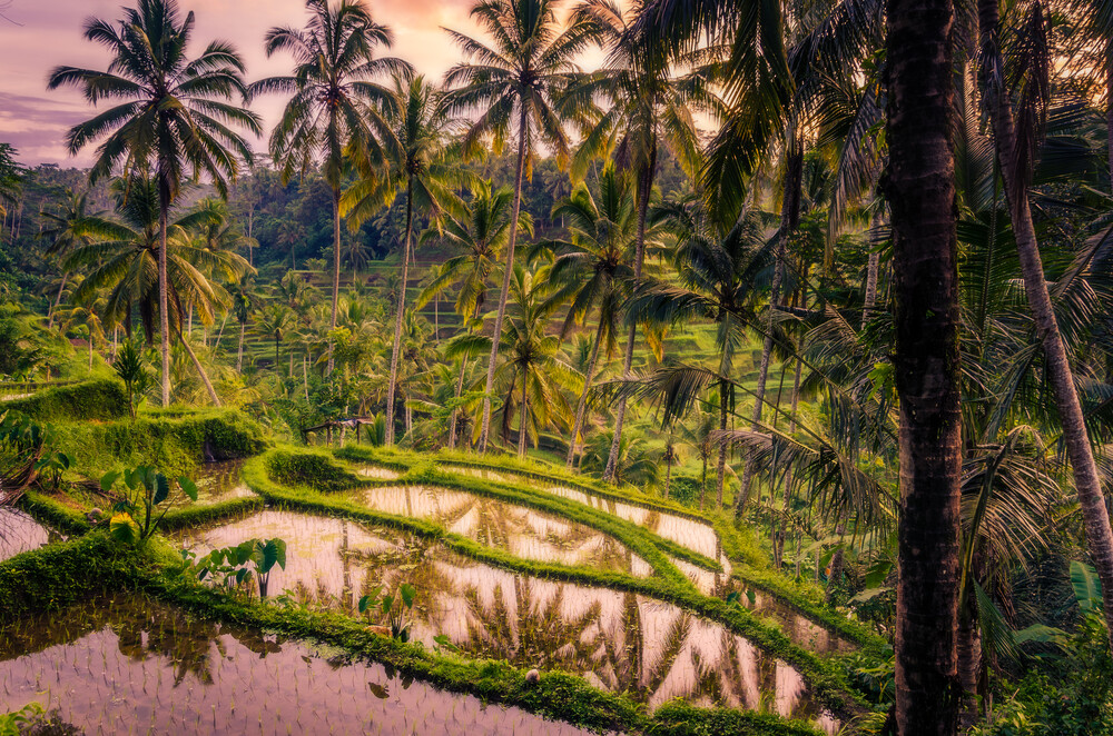 Tegalalang Rice Terraces - Fineart photography by Christian Seidenberg
