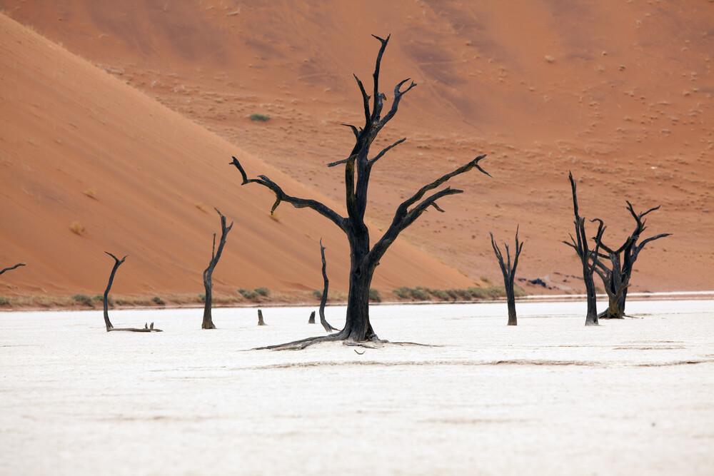 Dead Vlei, Namibia - fotokunst von Angelika Stern