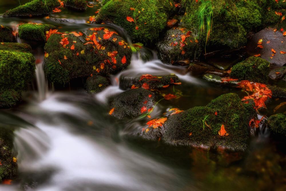 Autumn Melodies - fotokunst von Yavuz Pancareken
