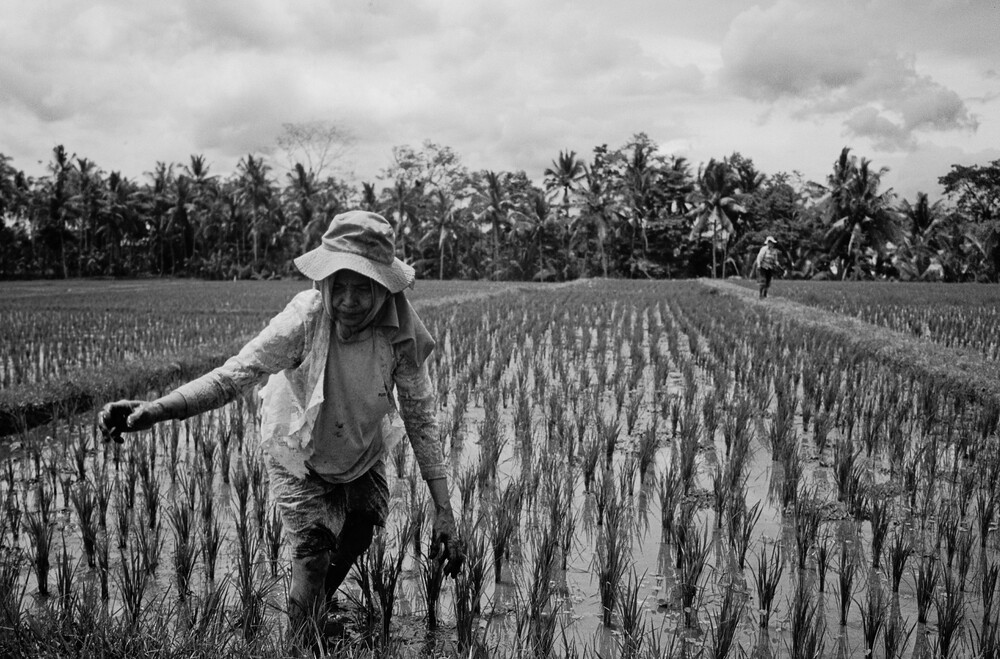 Bali,Ubud - Fineart photography by Jim Delcid
