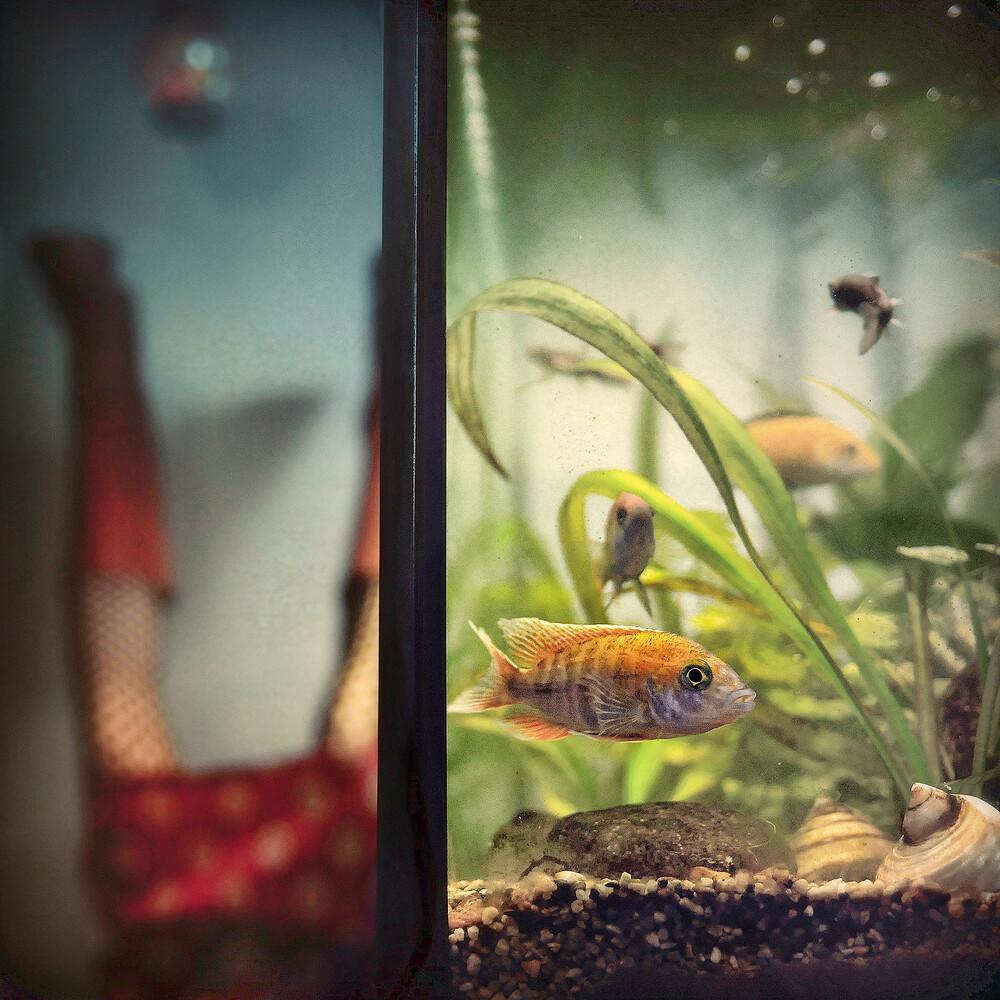 aquachill - fotokunst von Ambra